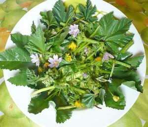 insalata-campagnola-con-erbe-selvatiche